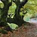 Muniellos fotos: bosque de Moal