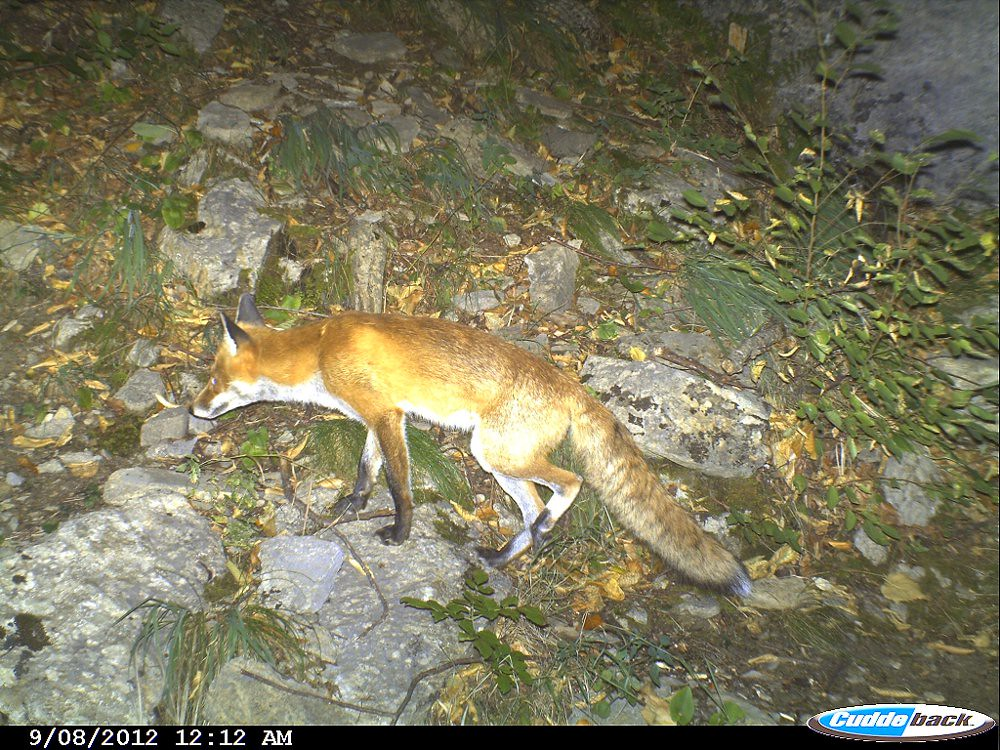 camera trapping for wildlife research pdf