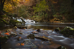 Autumn Light (yadrad) Tags: autumn leaves river woods devon southhams ivybridge rivererme