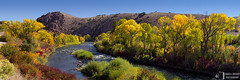 Gunnison River, Autumn (James L. Snyder) Tags: morning blue autumn trees red panorama orange usa mountains green fall water leaves yellow horizontal rural river island gold golden colorado whitewater glow natural country tan peaceful sunny bluesky brush september rapids foliage nationalforest clear willow shore highdesert riverbed cottonwood glowing rockymountains wildrose cloudless deciduous riverbank bushes shrubs scrub rugged wetland bramble gulch riparian thicket tamarisk almont therockies russianolive 2011 elaeagnusangustifolia gunnisonnationalforest tamarix rhustrilobata sawatchrange gunnisonriver gunnisoncounty rosaarkansana salixamygdaloides skunkbushsumac populusangustifolia salixgeyeriana gunnisonriverbasin fishergulch eastriverbasin