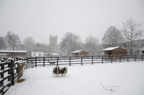 Stepney City Farm ©  Still ePsiLoN