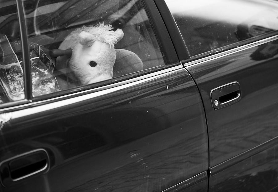 car_horse