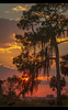 When you least expect it... (jeannie'spix) Tags: sunset dir photomix 2013 dinnerislandranch bestevergoldenartists dirsunset dinnerislandranch2013 sunsetdir