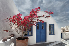Decorative  (kaising_fung) Tags: bougainvillea blooming blue door whitewash