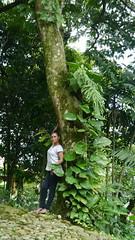 P1020040 (Mayan_princess) Tags: chiapas argovia finca resort caf coffee kaffee paraso paradise vegetacin vegetation verde green ro river spa relajacin relax forest selva orgnico autosostenible