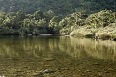 Nikau Forest, West Coast, NZ (wisnesky1) Tags: forest foliage water river rocks nz nature newzealand newzealandbush canon colour bush outdoor outside west coast