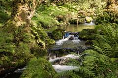 Little waterfalls_NK2_2479 (Jean Fry) Tags: burrator dartmoor dartmoornationalpark devon englanduk nationalparks newleycombelake uk westcountry brooks river streams waterfalls water