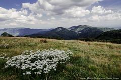 En montagne (Manonlemagnion) Tags: paysage nature montagne ballon ballondalsace alsacevosges fleur bellevue nuage nikond7000 1685mm