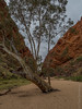 Simpson's Gap (Chris Smearing) Tags: sand tree river northernterritory nationalpark simpsonsgap westmacdonnellnationalpark cliff australia