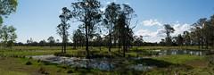 Mongogarie Creek flats (dustaway) Tags: panorama landscape wetlands lagoon mongogariecreek richmondvalley northernrivers nsw australia australianlandscape ruralaustralia rurallandscape afternoonlandscape