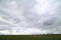 IMG_8397 (gervo1865_2 - LJ Gervasoni) Tags: country landscape pyrenees hwy between carisbrook newstead canola farming paddocks victoria australia 2016