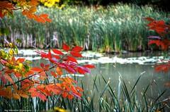 colours 1 (Rex Montalban Photography) Tags: autumn fall colours rexmontalbanphotography