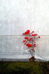 It's the Little Things (Andr Hofmeister) Tags: autumn red tree rot fall wall concrete wand herbst minimal explore velvia carpark vignette baum android beton parkhaus minimalistisch huaweihonor huaweihonour huaweiu8860