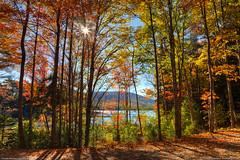Autumn in Acadia (Greg from Maine) Tags: autumn fallleaves nature leaves landscape fallcolors maine newengland autumnleaves foliage barharbormaine acadia barharbor acadianationalpark eaglelake carriageroad