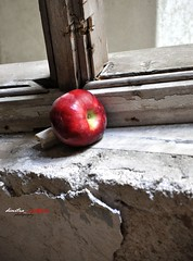 hungry for beauty (dimitra_milaiou) Tags: life wood old light red people food abandoned love apple window fruits beauty lines architecture silver dark greek hope grey hotel wooden intense nikon ruins europe shadows time d live culture hellas athens greece eat future need reality civilization hungry xenia dust shape past society emotions 90 cosmos crisis feelings 2012 flickers antithesis dimitra parnitha attiki d90          milaiou