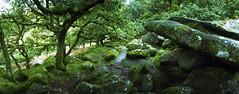 Horizon Perfekt UK101 (tracyvmoore) Tags: green nature forest moss lomo lomography woods rocks fairies kodakportra800 dartmoornationalpark horizonperfekt wistmanswoods tracyvmoore