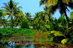 Paradise (Kumaravel) Tags: landscape nikon goa kumaravel theleelagoa d3100