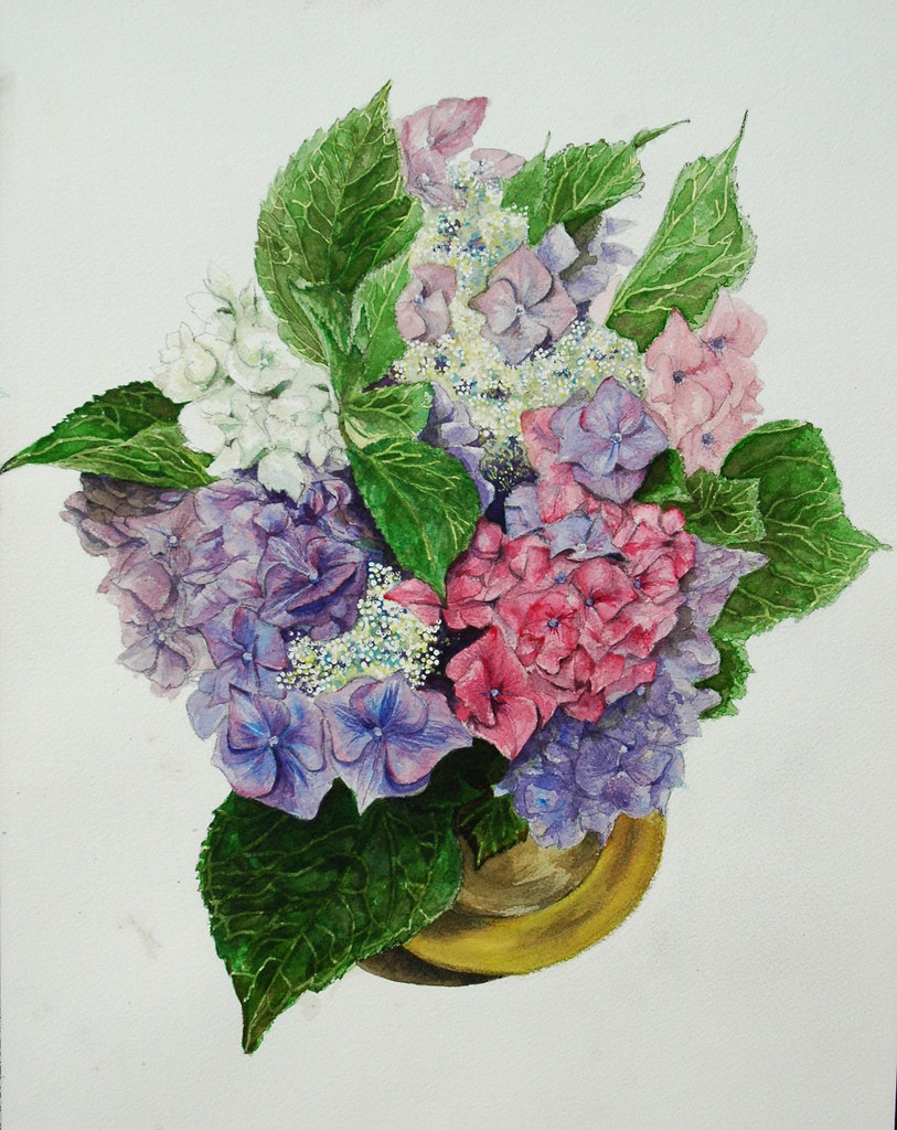 The World S Best Photos Of Drawing And Hortensia Flickr Hive Mind
