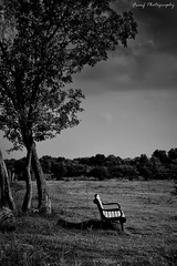 "Choice, Chance, Change..You must Make a ""Choice"" to take a ""Chance"" or Your life will never ""Change""....[Explored- Oct 21] (fareeharauf) Tags: park trees bw white black tree bench nikon d3200"
