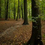 Micheldever woods 1