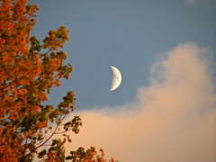 fall • moon (origamidon) Tags: usa moon clouds burlington vermont fallcolors moonrise vt changingleaves greenmountainstate chittendencounty 05408 origamidon donshall burlingtonvermontusa