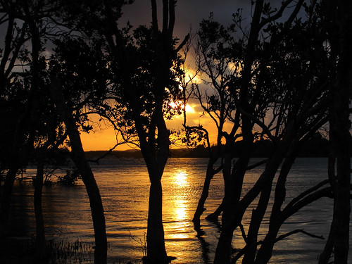 Sunset in the Mangroves