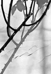 Apparenza (stendol [L.B.W.L.]) Tags: shadow bw white black muro texture wall shadows pentax ombra bn ombre bianco nero k5 apparenza semblance