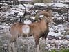 Texas Whitetail Hunt & Exotics - Kerrville 11