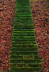 Service Staircase (Lutz Koch) Tags: green stairs moss pentax treppe staircase a3 service grün mossy moos stairwaytoheaven stonesteps idstein k7 blueribbonwinner bemoost photosgermany elkaypics diensttreppe