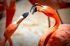 Natura (CeM Ideas) Tags: natura uccelli animali