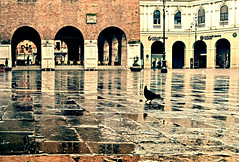Pigeon In The Rain (albireo2006) Tags: italy reflection wet rain square italia pigeon dove arches piazza piccione treviso veneto piccioni piazzadeisignori