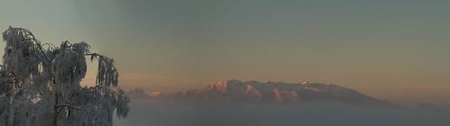 Mountain-Tree-Panorama