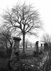 Carema (Davide Vicenzi) Tags: tree torino ds 4x5 100 rodinal bancoottico largeformat biancoenero 10010 vigna fomapan carema grandeformato fatif
