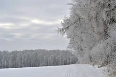 _DSC6339 Winterlandschaft mit Schnee und Raureif-Winter landscape with snow and hoarfrost (baerli08ww) Tags: schnee winter snow forest germany deutschland nikon wald raureif rheinlandpfalz westerwald mygearandme mygearandmepremium mygearandmebronze mygearandmesilver rememberthatmomentlevel1 rememberthatmomentlevel2 rememberthatmomentlevel3