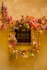 Stucco Wall.jpg (Mario Giambattista) Tags: flowers orange window yellow wall photo vines colorful with framed decoration vine wallart tuscany colourful decor interiordesign homedecor stucco oilpainting homedecoration homedesign workofart colourprint foryourhome mariogiambattista