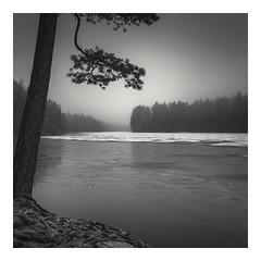 Freezing Lake (Vesa Pihanurmi) Tags: monohrome blackandwhite lake pond ice snow water pine trunk tree landscape waterscape nature espoo finland winter