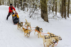 Dogs & Snow (tm1126) Tags: happiness dog chapelco d7100 snowsleds snow covered nikon skiresort white