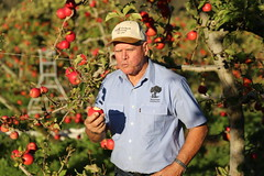 IMG_5994 (mavnjess) Tags: 28 may 2016 harvey edward giblett newton orchards manjimup harveygiblett newtonorchards cripps pink lady crippspinklady popaharv eating apple crunch crunchy biting apples pinklady pinkladyapple harv gibbo orchard appleorchard orchardist