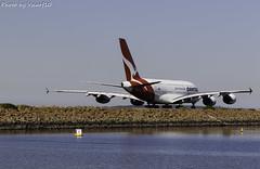 Qantas Airbus A380 (vscarf10) Tags: qantas a380 massive taxiing sydney airport runway 4engines tail flying kangaroo wheels landing gear water rocks blue red windows wingspan large plane aircraft canon 7dmarkii 7dmkii mark ii eos dslr 100400mmii zoom