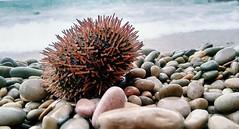 In Peniscola.   #rocks #sea #mediterranian (adrianrojas9902) Tags: mediterranian sea rocks
