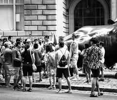 Celebrity (OneMarie!) Tags: ny nyc wallstreet street calles ciudad city nikon d7100 bw bn blancoynegro people gente crowd bull toro escultura