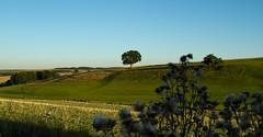 Landschaft (gutlaunefotos ) Tags: natur landschaft grn himmel