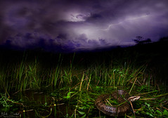 Stormy Night in the Glades (Nick Scobel) Tags: florida cottonmouth water moccasin storm lightning wide angle long exposure agkistrodon piscivorus everglades