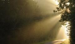 Auf dem Weg zum Bäcker; Bergenhusen, Stapelholm (Chironius) Tags: stapelholm bergenhusen schleswigholstein deutschland germany allemagne alemania germania германия szlezwigholsztyn niemcy gegenlicht morgendämmerung sonnenaufgang morgengrauen утро morgen morning dawn sunrise matin aube mattina alba ochtend dageraad zonsopgang рассвет восходсолнца amanecer morgens dämmerung explored