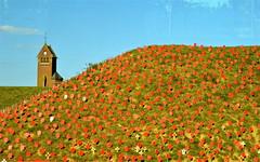 Centenaire de la Bataille de la Somme (JDAMI) Tags: talus coquelicots poppies muse centenaire batailledelasomme 1418 souvenir thiepval glise somme 80 france picardie nikon d600 2470