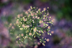 - (-LilyBeth) Tags: nature 50mm natura nikon d3000 dof depthoffield wonderfulworld outside bokeh colors