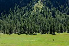 maerchenweg 1 (maxlabor) Tags: alps switzerland suisse alpine alpen svizzera dieschweiz graubünden grisons bever albulatal rhätischebahn albulavalley spinas märchenweg engadinvalley viaengadina rheatianrailway viaalbulabernina