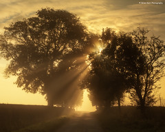 Misty Morning Rays (.Brian Kerr Photography.) Tags: trees sunlight mist cumbria rays edenvalley thesecretlifeoftrees