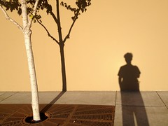 Plant Life (misterbigidea) Tags: street city shadow portrait urban tree me wall landscape golden shadows play view magic pedestrian sidewalk bark hour trunk birch planter silhoette planted
