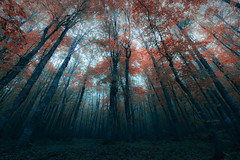 Dark forest (Ognen Bojkovski) Tags: camera wood autumn trees plants mountain tree film nature animals fog forest dark movie photography landscapes smog nikon shadows dramatic sigma macedonia horror ambient giants 1020mm magical epic enchanted select myst d800 sceene bistra ognen obojkovski bojkovski
